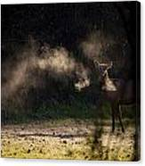 Calf Elk With Steaming Breath At Lost Valley Canvas Print
