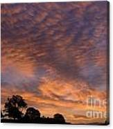 California Oaks And Sunrise Canvas Print