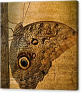 Caligo Canvas Print