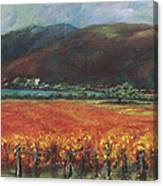 Calistoga Vineyard In Napa Valley By Deirdre Shibano Canvas Print