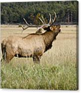 Call Of The Wild 2 Canvas Print