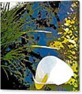 Calla Lily 7 Canvas Print