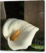 Calla Lily And Fence Canvas Print