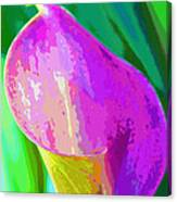 Calla Lily Art  Canvas Print
