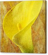 Calla Lily Beauty  Canvas Print
