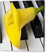 Calla Lily On Keyboard Canvas Print