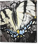 Callaway Tiger Swallowtail Butterfly Canvas Print