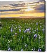 Camas Fields Canvas Print