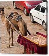 Camel Ready To Take Tourists For A Desert Safari Canvas Print