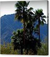 Camelback Beyond The Palms Canvas Print