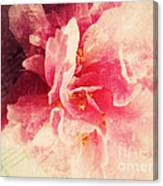 Camellia Flower With Music Canvas Print