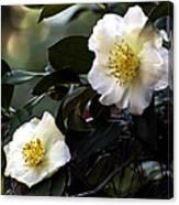 Camellia Nineteen Canvas Print