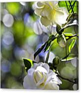 Camellia Thirteen Canvas Print