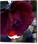 Camellia Twenty-six  Canvas Print