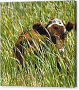 Camo Cow Canvas Print
