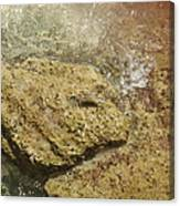 Camouflage Crabs Canvas Print