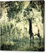 Camouflage Elk Canvas Print