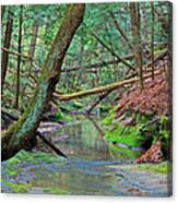 Camusfearna Gorge 4a Canvas Print