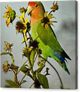 Can You Say Pretty Bird? Canvas Print
