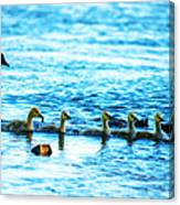 Canada Geese Family II Canvas Print