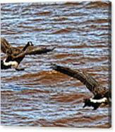 Canada Geese In Flight Lake Superior Canvas Print