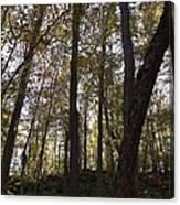 Canada Trees Canvas Print