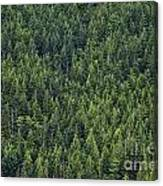 Canadian Boreal Forest. Canvas Print