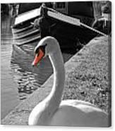 Canal Swan Canvas Print