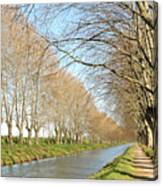 Canal With Tree Canvas Print