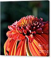 Candy Corn Cone Flower Canvas Print