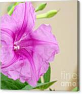 Candy Pink Morning Glory Flower Canvas Print