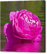 Candy Pink Rose  Canvas Print