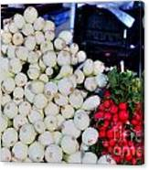 Candy  Sweet Onions Canvas Print