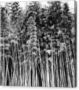 Canes At Canebrake Canvas Print