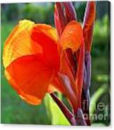 Canna Flower Canvas Print