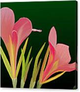 Canna Lilly Whimsy Canvas Print