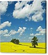 Canola Field And Clouds, Rathwell Canvas Print
