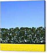 Canola Field And Trees Canvas Print
