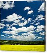 Canola Field, Brookfield, Prince Edward Canvas Print