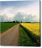 Canola-rapeseed Flowers Canvas Print