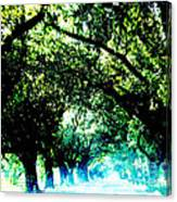 Canopy Canvas Print