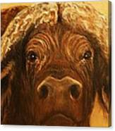 Cape Buffalo Canvas Print