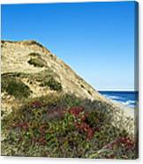 Cape Cod Dune Cliff Canvas Print