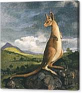 Captain Cook: Kangaroo, 1773 Canvas Print