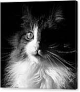 Captivated Cat - A Tribute Canvas Print