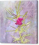 Captured Blossom Canvas Print