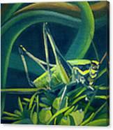 Card Of Mister Grasshopper Canvas Print