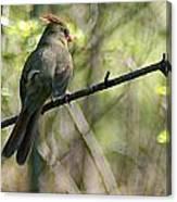 Cardinal 5 Canvas Print