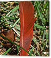 Cardinal Feather Canvas Print