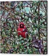 Cardinal Feb 2012 Canvas Print